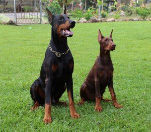 שירותי אילוף כלבים בצפון