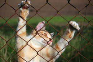 סוגי חול לחתולים